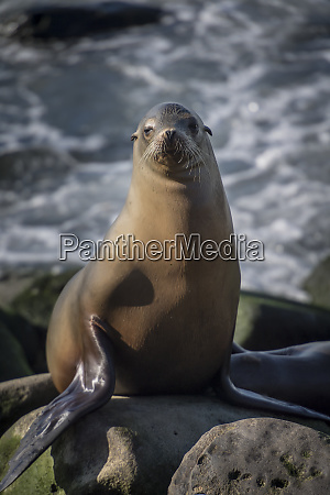 full view of a sea lion