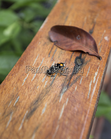 a dead insect on a wooden