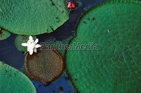 south america brazil amazon amazon river