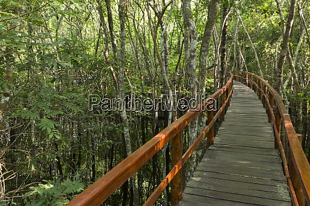a wooden walkway at a jungle