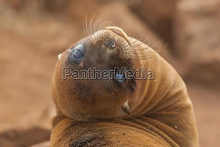 ecuador galapagos national park sea lion