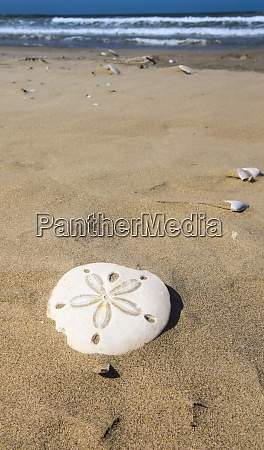 sand dollar beach magdalena island baja