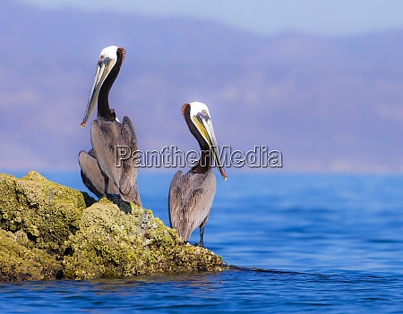 baja peninsula sea of cortez gulf