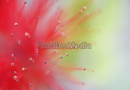 mexico baja california abstract detail of