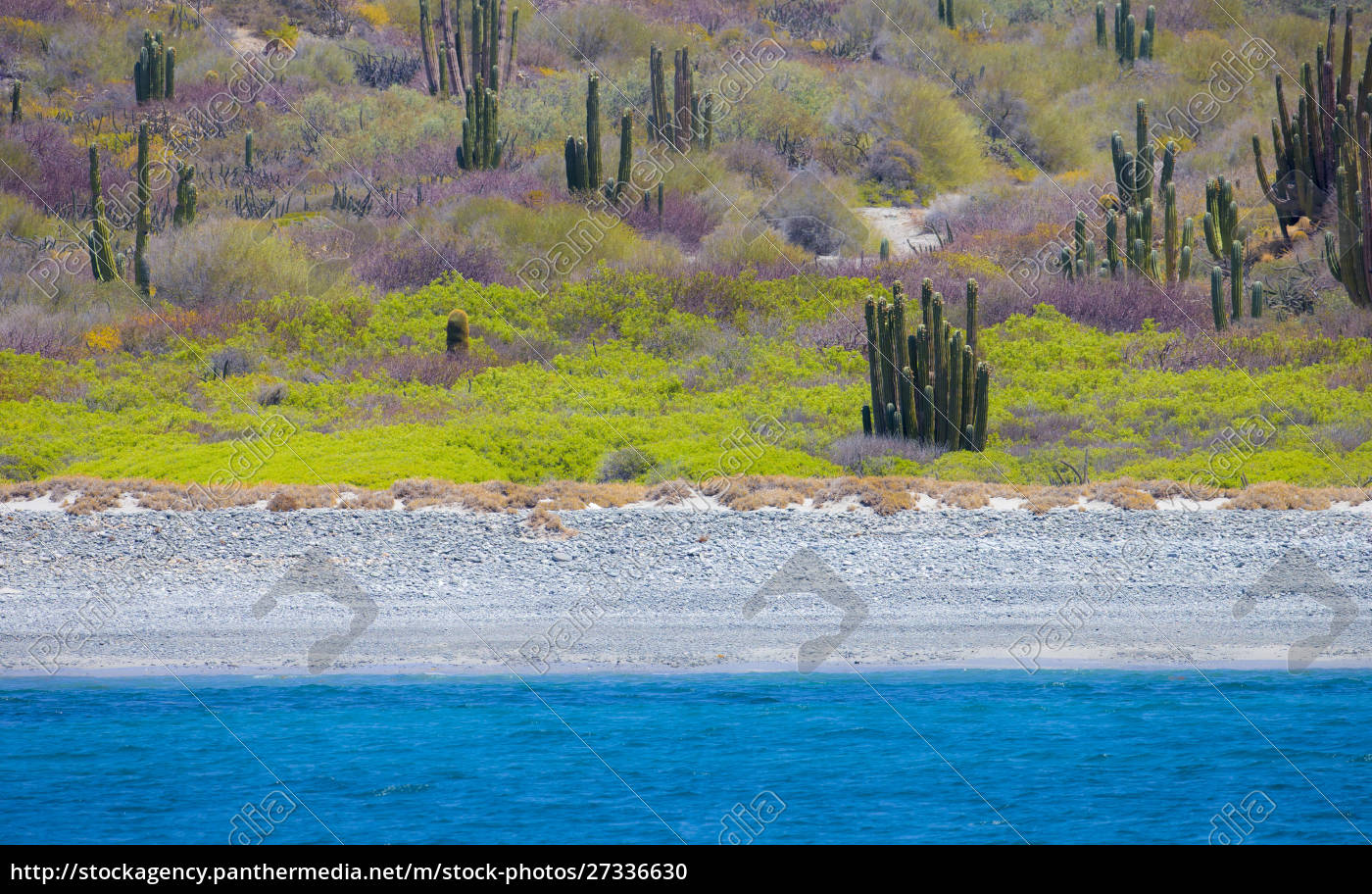 baja, , sea, of, cortez, , unesco, site, - 27336630