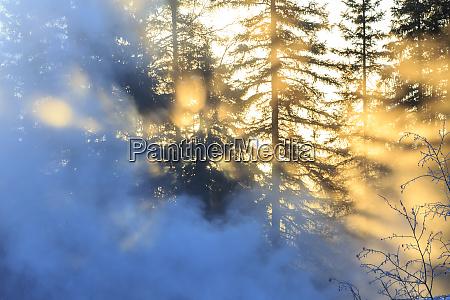 scenic near fairbanks alaska usa