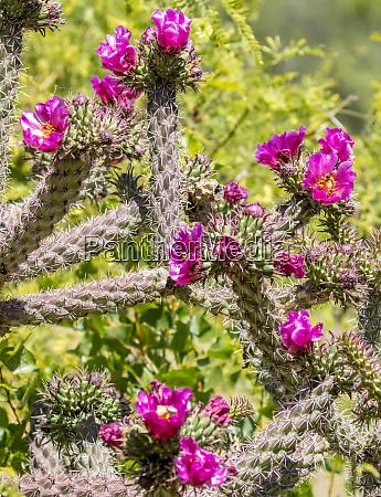 usa arizona portal blooming cactus fred