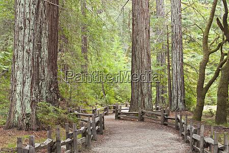 usa california view of trail through