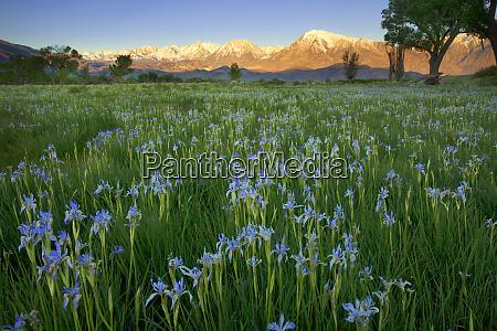 usa california sierra nevada mountains wild