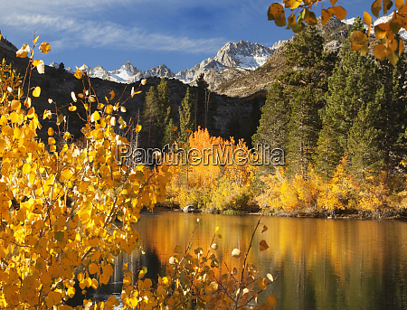 usa california autumn color in bishop