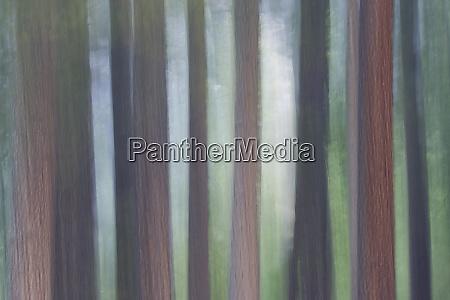evergreen trees foggy morning yosemite valley