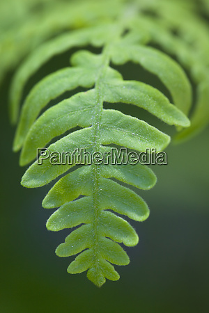 usa california yosemite national park fern