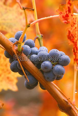 usa california napa valley wine country