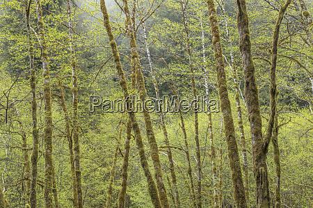 usa california redwood national park moss
