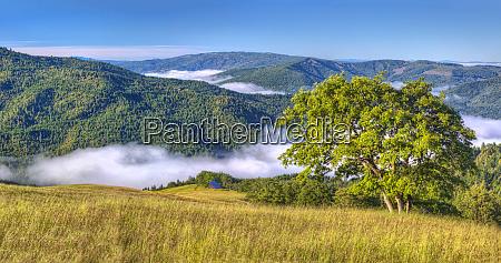 usa california redwood national park early
