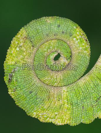 usa california close up of tail