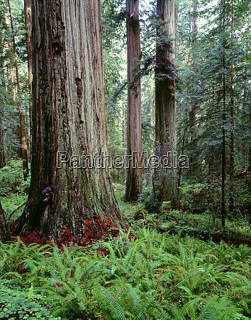 usa california prairie creek redwoods state