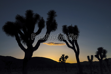 sunset in joshua tree national park