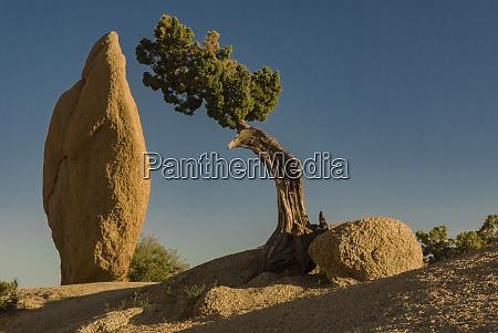 usa, , california., joshua, tree, national, park. - 27338799