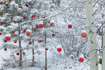 usa colorado woodland park fresh snow