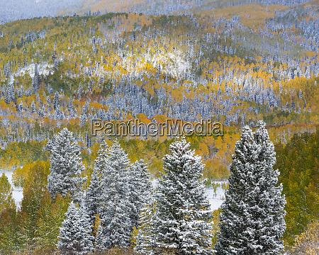 usa colorado uncompahgre national forest landscape