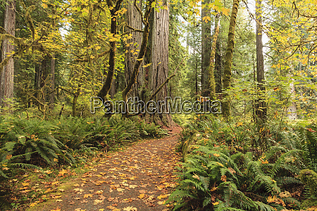 prairie creek redwoods national forest coastal