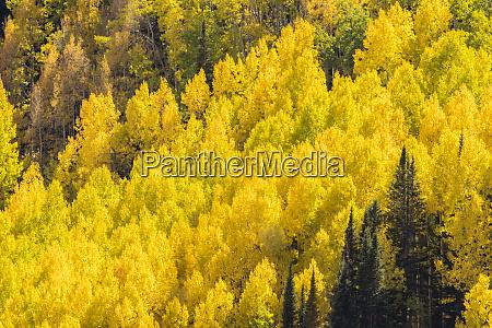 usa colorado gunnison national forest ohio