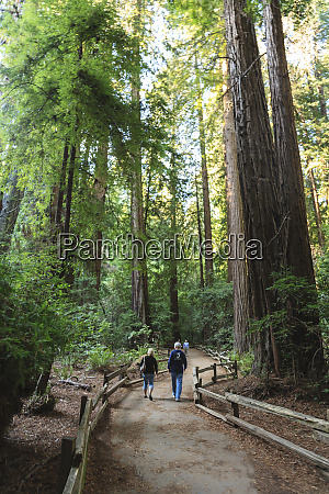 cathedral grove redwood forest muir woods