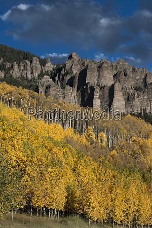 usa colorado autumn yellow aspen and
