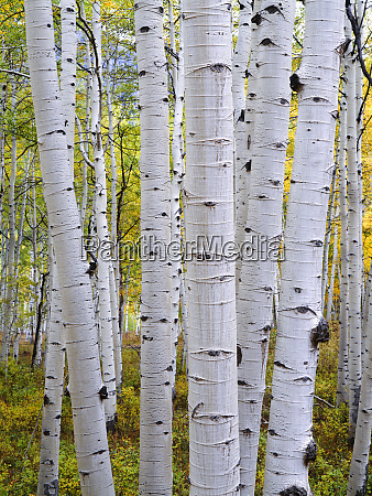 usa colorado gunnison national forest large
