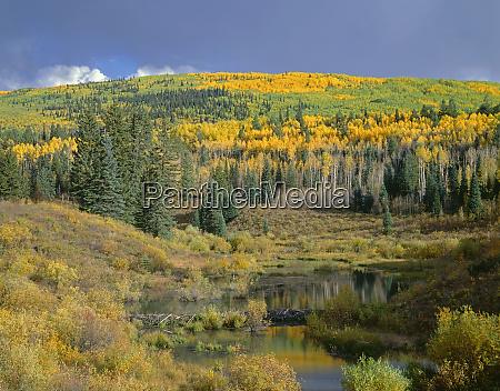 usa colorado gunnison national forest fall