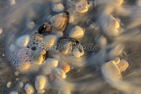 surf on seashells on sanibel island