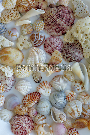 collection of seashells from sanibel island