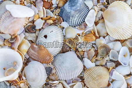 usa florida close up of shells