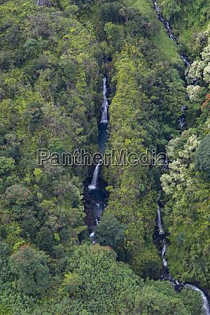 koolau forest reserve hana coast maui