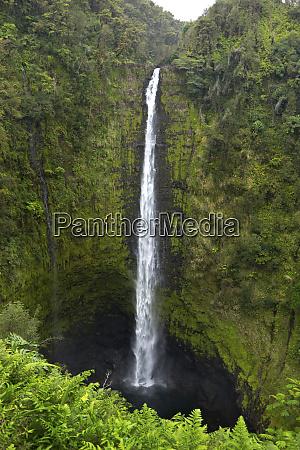 akaka falls hawaii big island