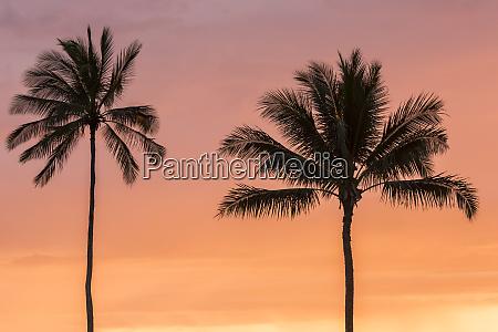 usa, , hawaii, , kauai, , lawai., palm, trees - 27340621