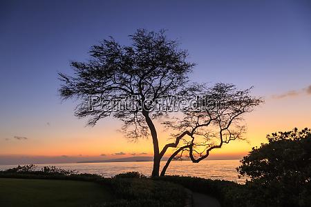 maui hawaii usa trees by the