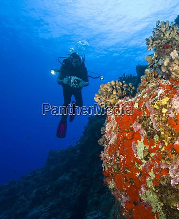 scuba diver with video camera brilliant
