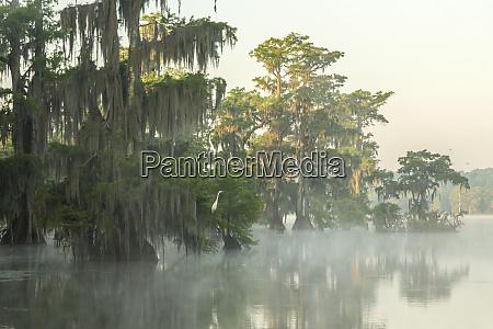 usa louisiana lake martin foggy sunrise