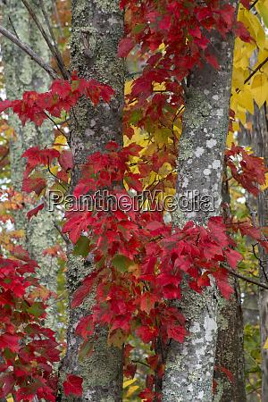 usa maine acadia national park autumn