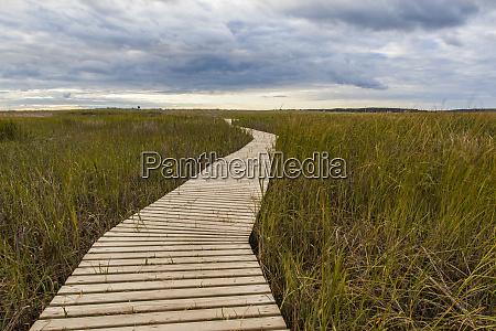 the boardwalk through the tidal marsh