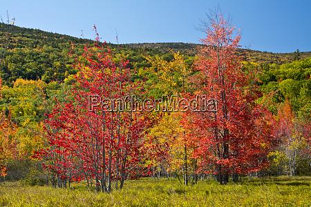 autumn color sieur de monts spring