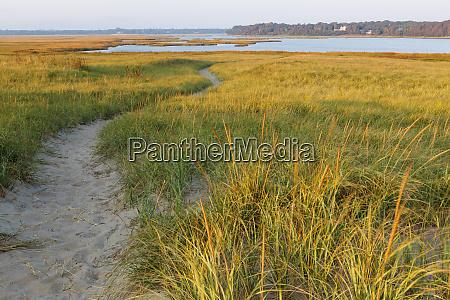 a sandy path through dune grass