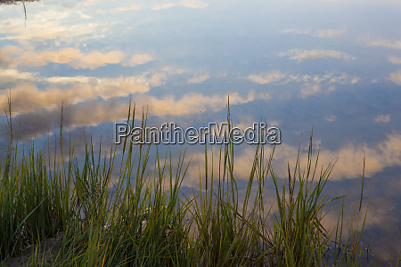 reflections in a tidal marsh at