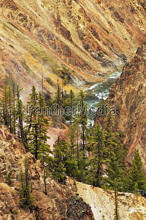 trees and colorful patterns on canyon