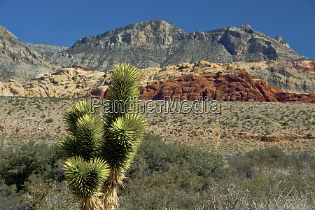 joshua tree and red rock canyon