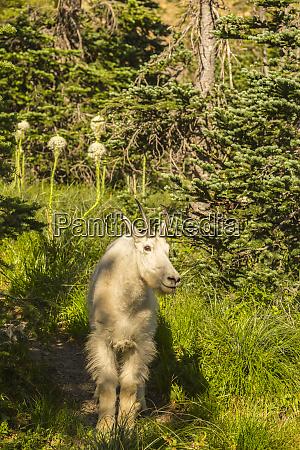 usa montana glacier national park close
