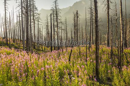 usa montana glacier national park st