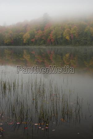 usa new york state foggy autumn
